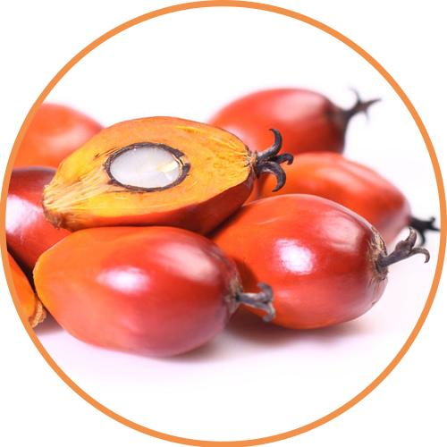 棕櫚核油Palm K