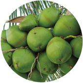 椰子油Coconut