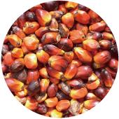 紅棕櫚油Palm F